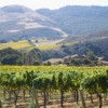 Santa Barbara County: Rugged Pacific Coast Cooling Ocean Breezes, Transverse Canyon and 50 Different Grape Varietals