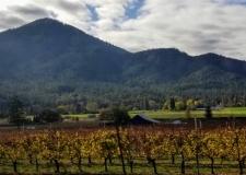 Cowhorn Vineyards