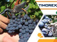 Biopesticide Timorex Gold