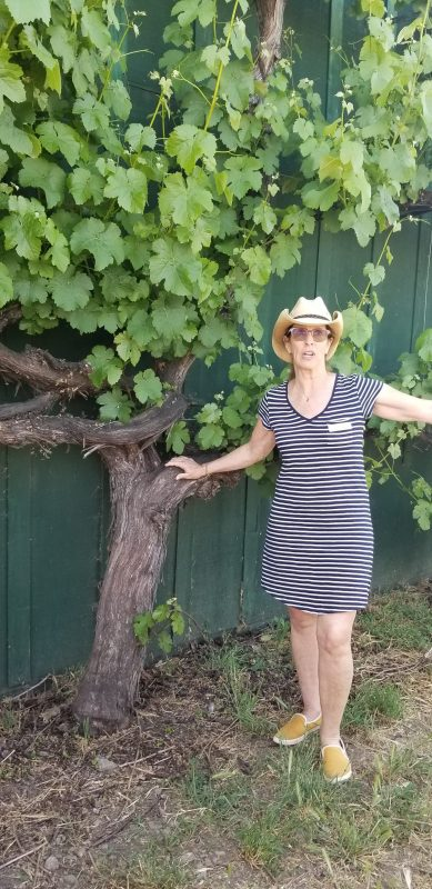Salomé Garau-Taylor shows the giant grapevine that has grown up the side of the barn.