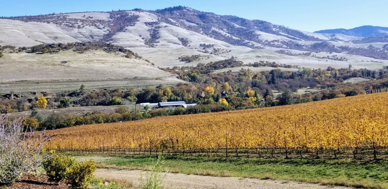 The vineyards and surrounding hillsides
