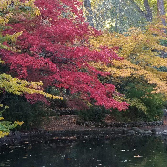 Japanese Garden in Lithia Park