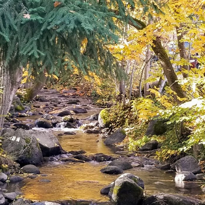 Babbling Brook in Lithia Park in the Fall
