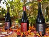 An afternoon with Petite Sirahs