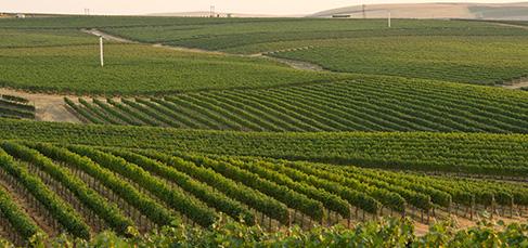 Seven Hills Vineyards