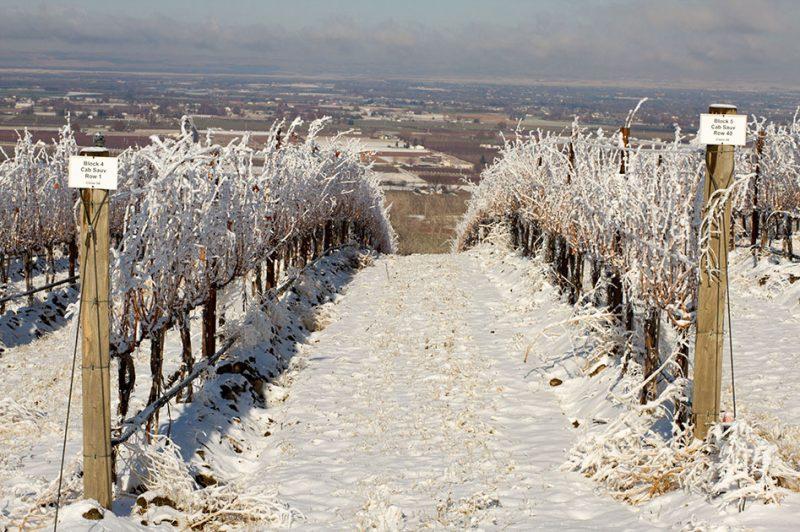 Winter in the Vineyards
